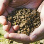 畑と土と手