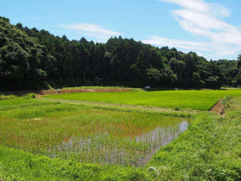 自然農の田んぼと森