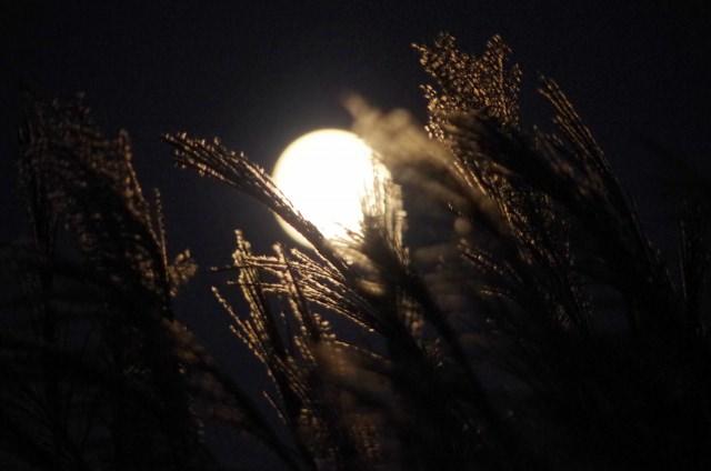 十五夜とススキ(満月ではない月のイメージ)