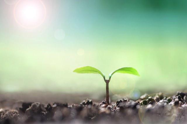 環境保護・エコイメージ(土から植物の芽が出ている)