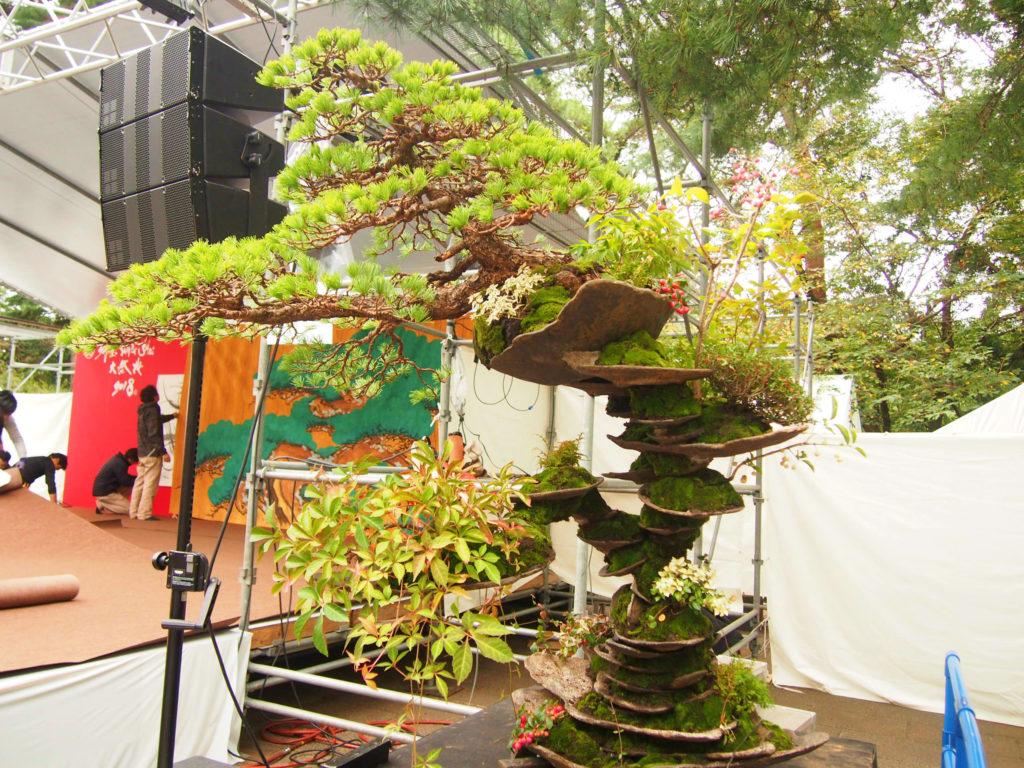 平尾成志さんによる盆栽