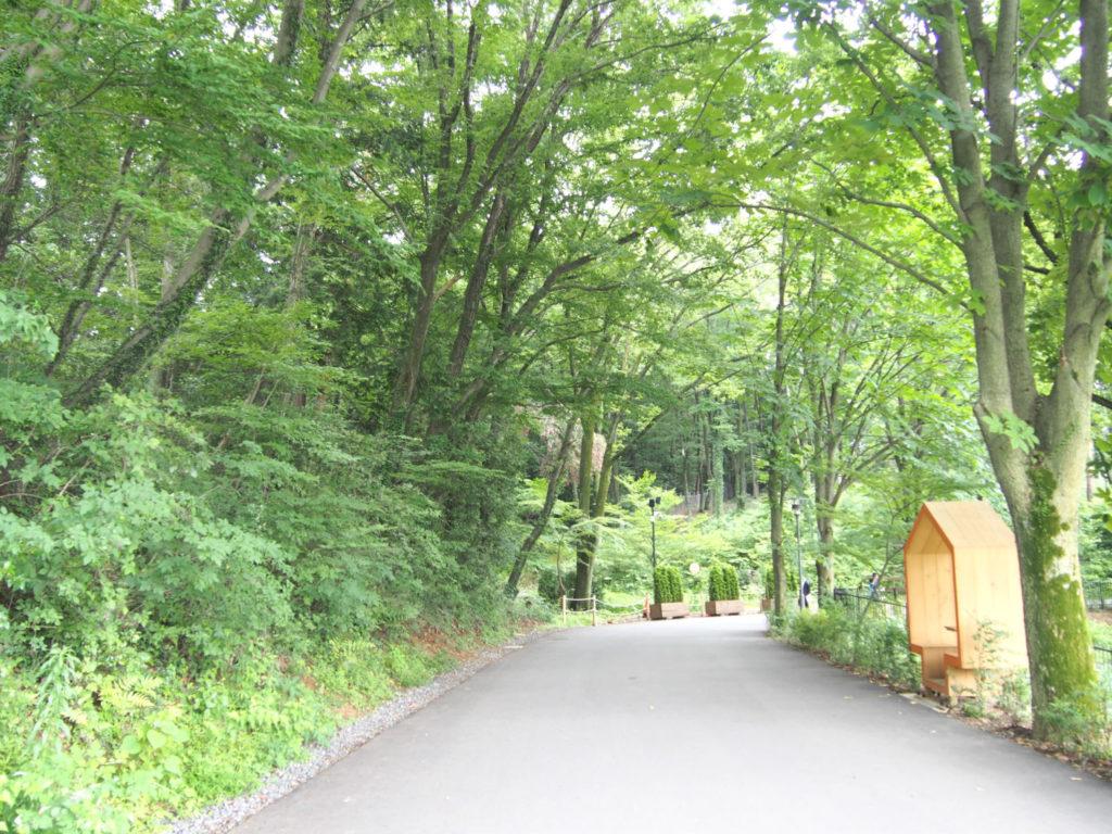 ムーミンバレーパークへの森の道