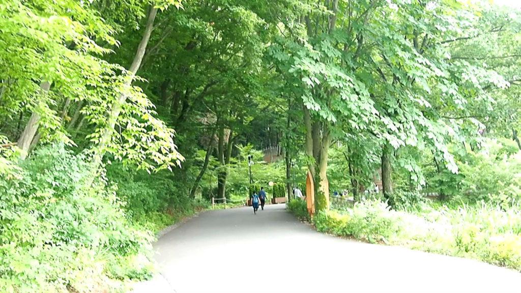 ムーミンバレーパークへ続く緑の道