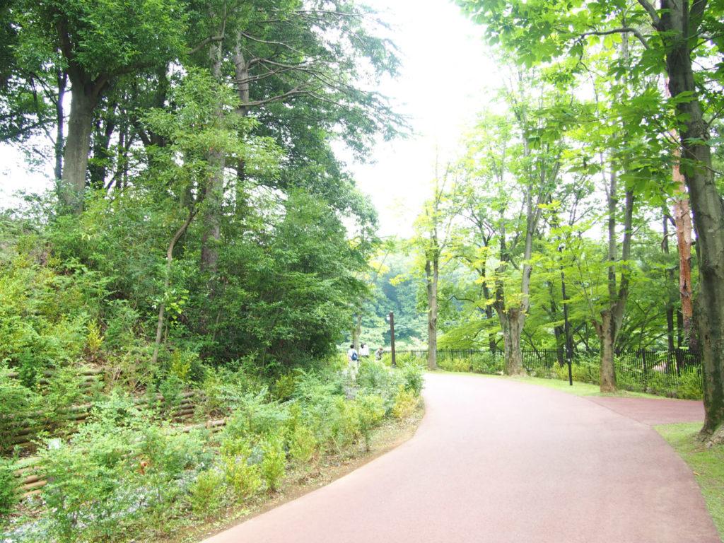 ムーミン谷エリアへ続く森の道