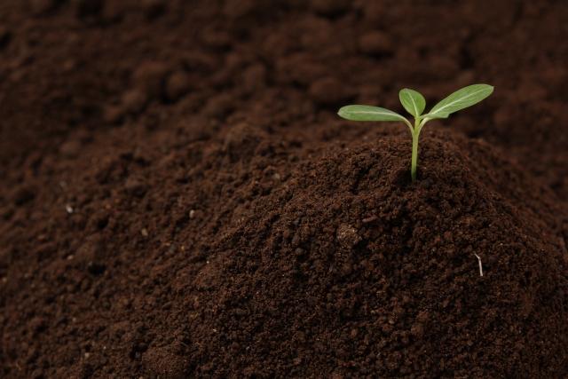 土と芽 (まとめ用画像)