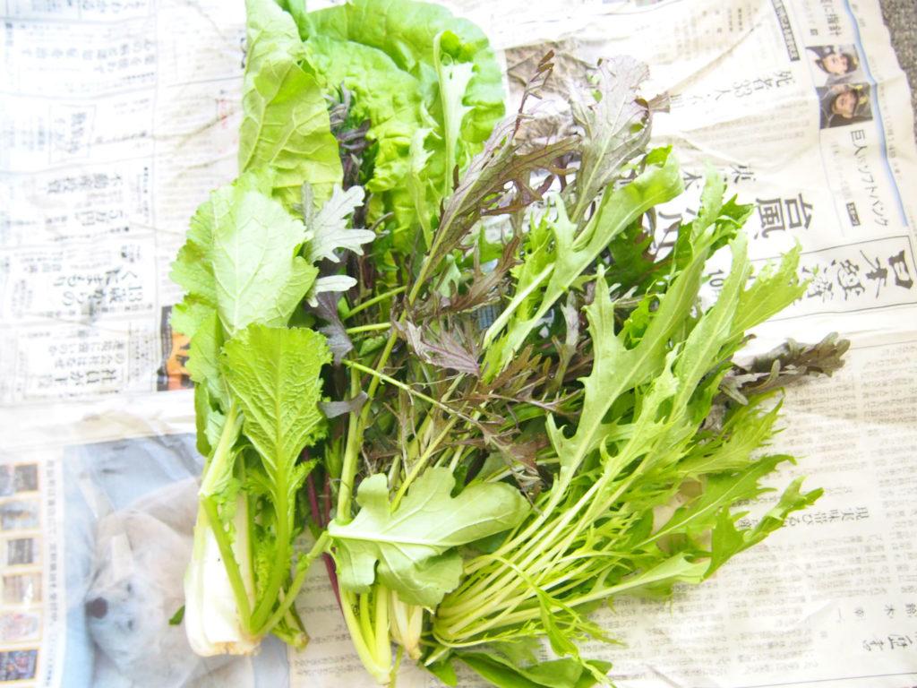 食べチョクの葉物野菜